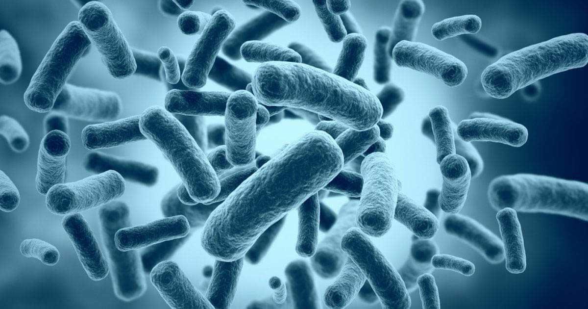 """Vi khuẩn P.Acnes – """"thủ phạm chính"""" gây mụn trên da"""