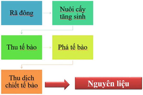 Quy trình tạo dịch chiết TBG Nhung hươu