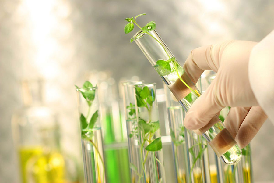 Dịch chiết Tế bào gốc Thực vật có thể ứng dụng trong chăm sóc và trẻ hóa da