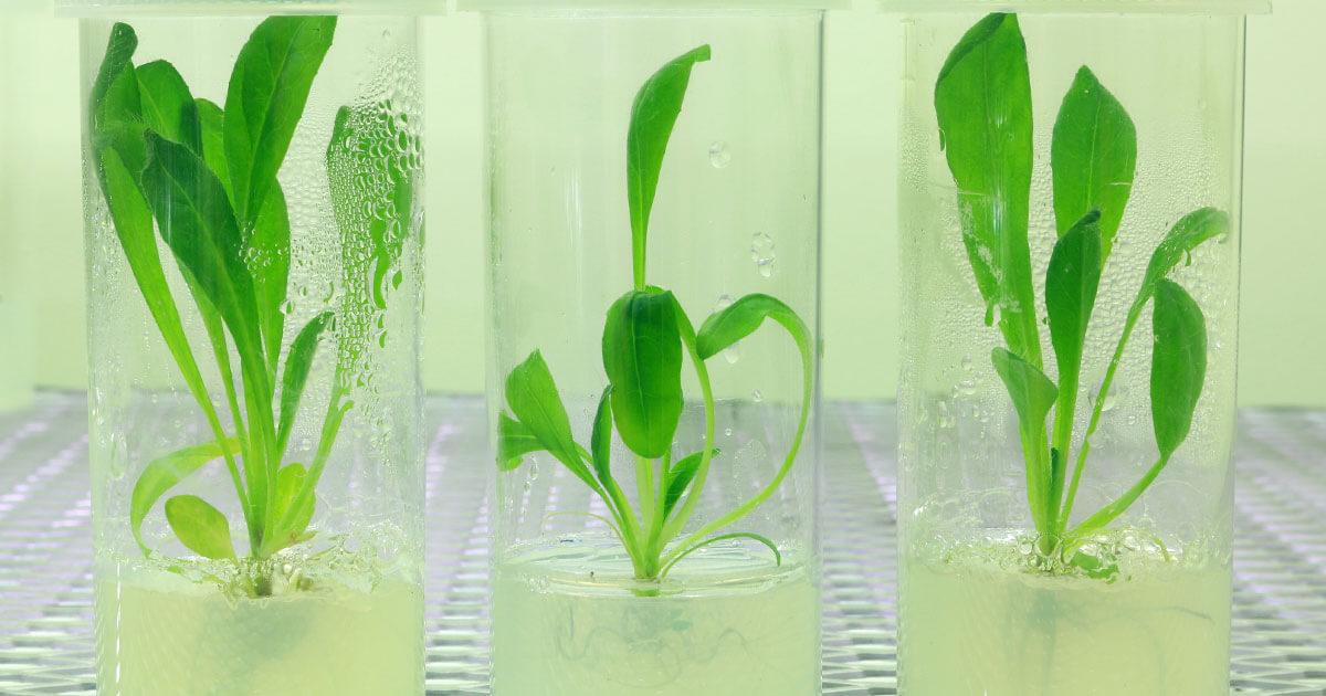 Tế bào gốc Thực vật - Công nghệ mới trong việc chống lão hóa da