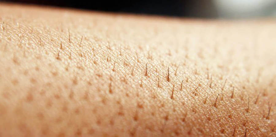 Thông thường lông chỉ mọc rậm ở một số vị trí trên cơ thể