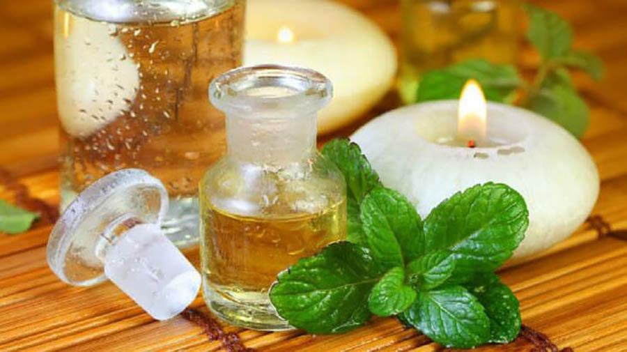Tinh dầu của bạc hà được chiết xuất từ thân, lá của cây bạc hà theo nhiều phương pháp