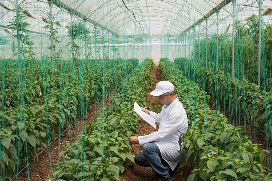 Sản phẩm Organic được nuôi dưỡng trong điều kiện hài hòa với môi trường