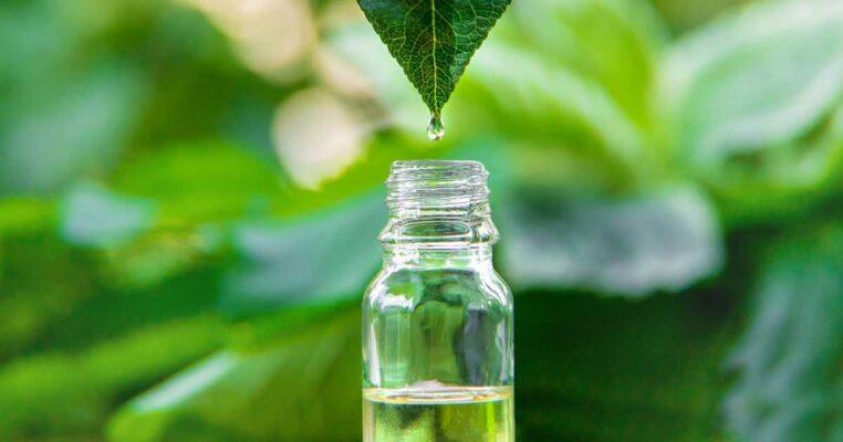 Khử mùi cơ thể với trà xanh vừa an toàn lại hiệu quả