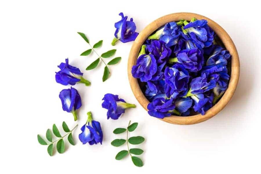 Hoa đậu biếc có màu xanh tím đặc trưng và được trồng nhiều ở Việt Nam